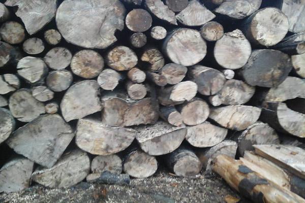 Drva-slika-1