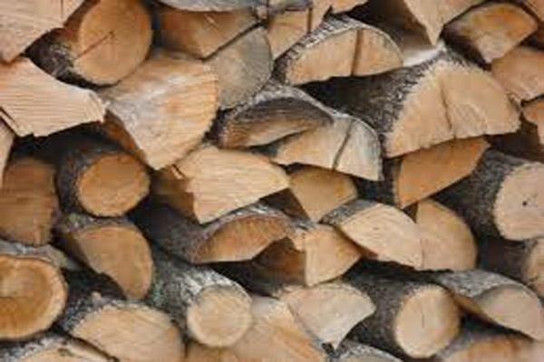 Drva-slika-2