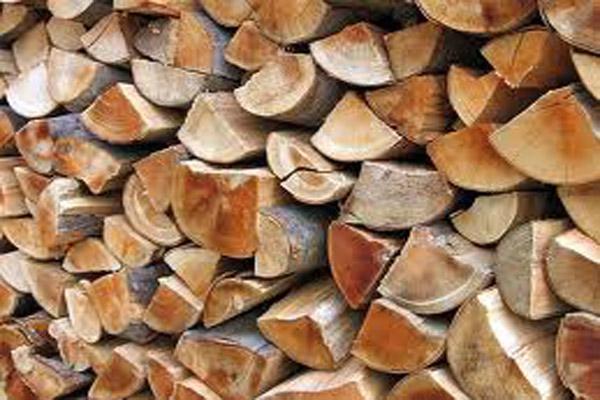 Drva-slika-3