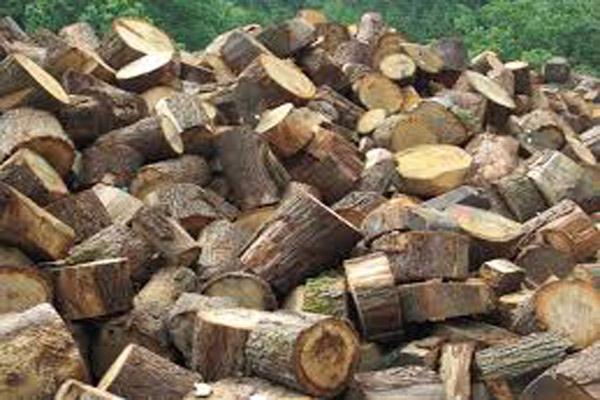 Drva-slika-4